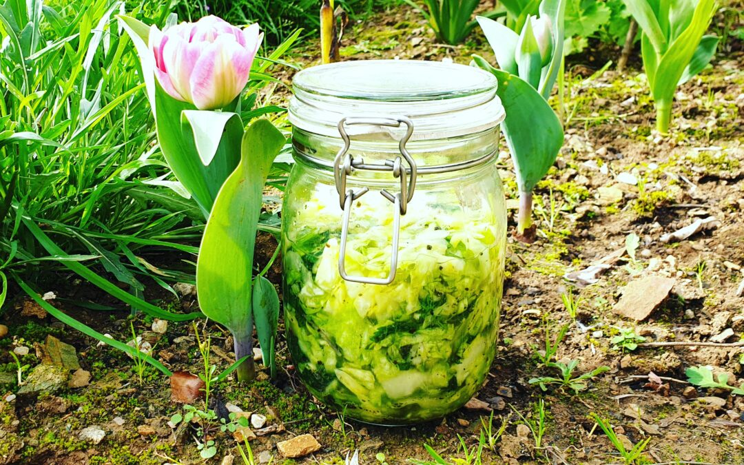 Cabbage, Nettle, Garlic & Fenugreek Kraut Recipe
